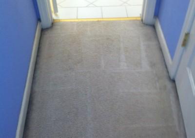 Cypress -Vomit-2-after-carpet